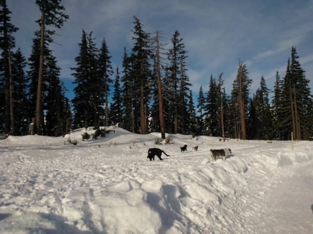 There is a nice off-leash area for dogs at the far end of the Mt. Bachelor parking lot. Spike and Duke made some friends.