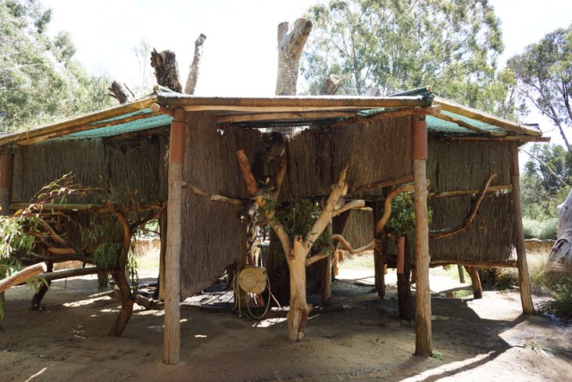 """Koalas """"chillaxing"""". They had water continuously spraying on the roof to keep them cool."""