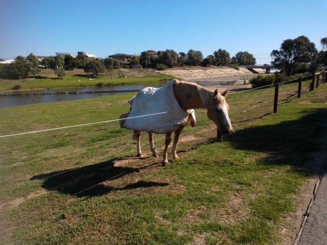 Part of the bike path ran along a lush horse pasture, where they wander right up to you.