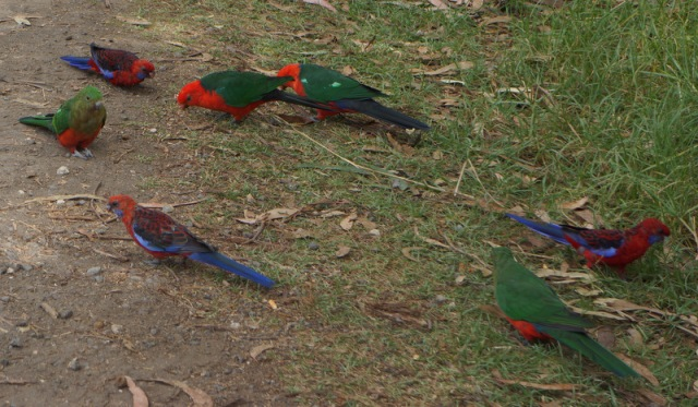 Wild Parrots that were all over the place