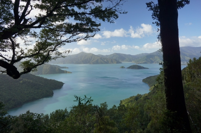 View from a portion of the Queen Charlotte Track.