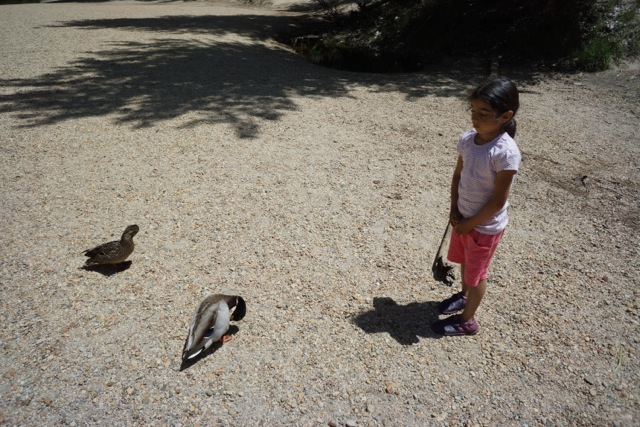 Mira saying hello to the ducks.