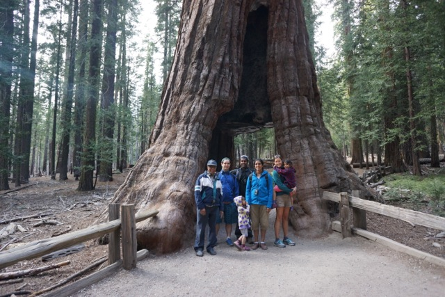 Mariposa Grove, Giant Sequoias