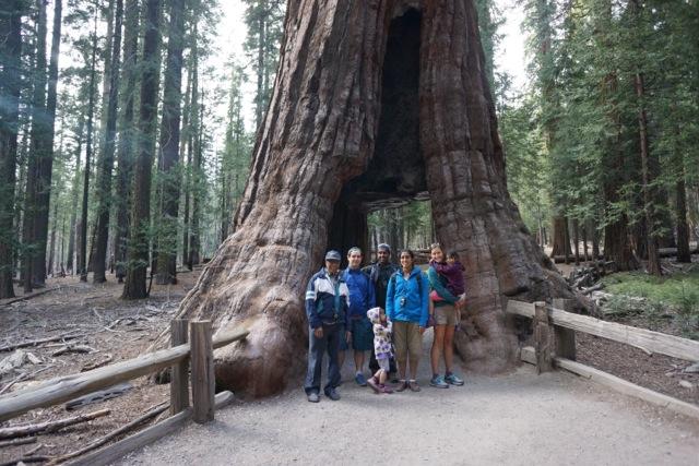 Mariposa Grove, Giant Sequoias