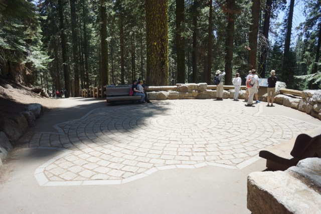The pattern on the pavement marks the girth of the General Sherman tree.