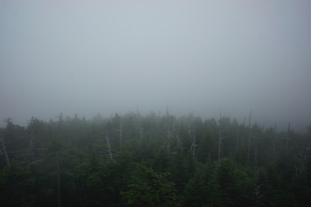 Breathtaking view from a top Clingman's Dome.