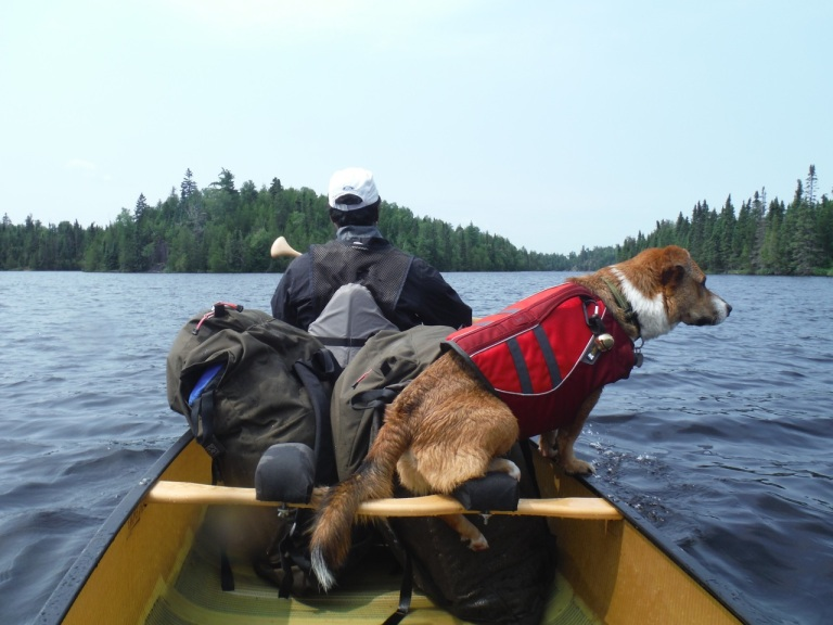Duke figuring out what place is most comfortable in the canoe.  It was hilarious watching him try out different set ups.