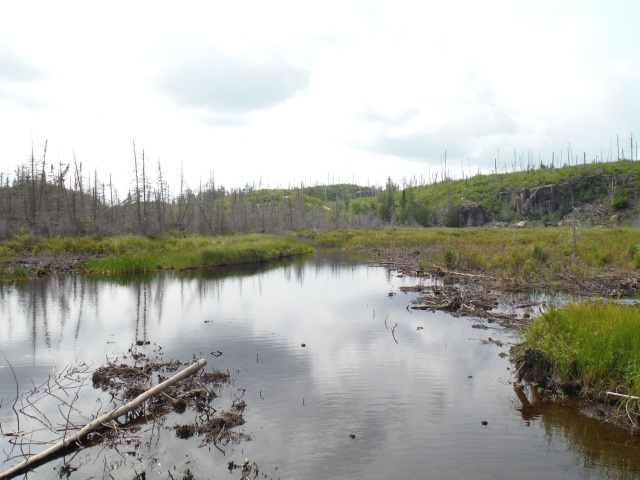 A muddy portage in a burn area.