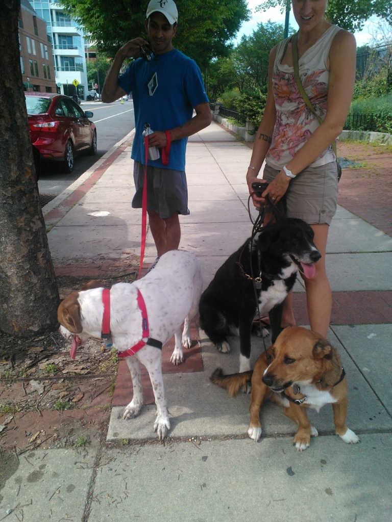 "We met up with my cousin, (his name is also Ravi!) in downtown Philly. Duke and Spike got to meet his dog, ""Bernie""."