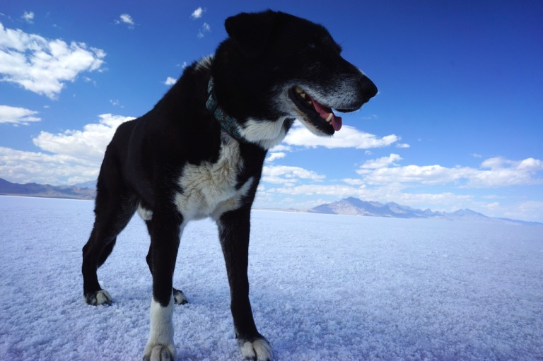 On the way to Tahoe we stopped at the famous Bonneville Salt Flats for a little photo shoot.  Spike stole the show.