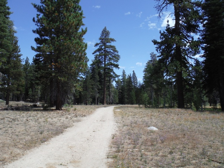 Running the Nordic trails at Sugar Pine Point State Park.