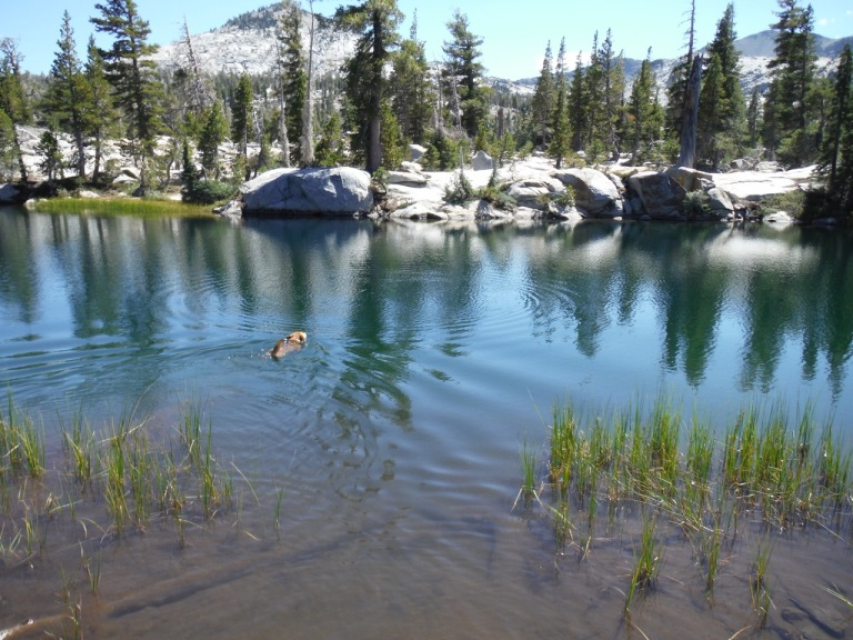 Duke loving the alpine lakes.  We took a dip, albeit a chilly one, before Duke got in.