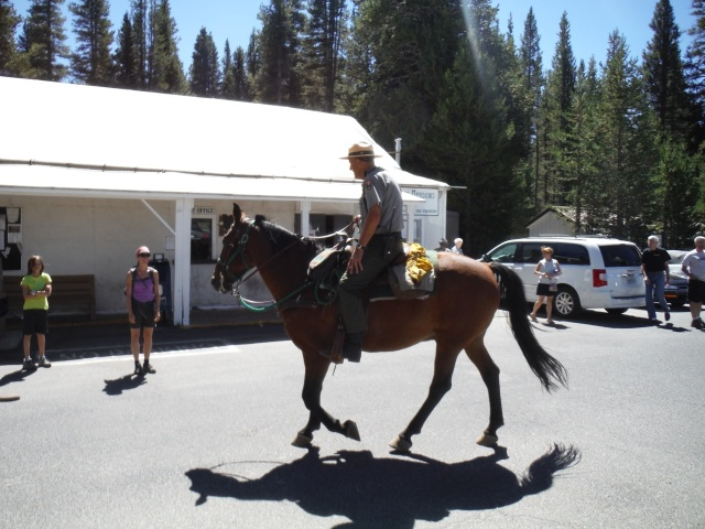 Food pick up at Tuolumne Meadows in Yosemite, our first resupply.  And a visit from a friendly ranger and his horse.
