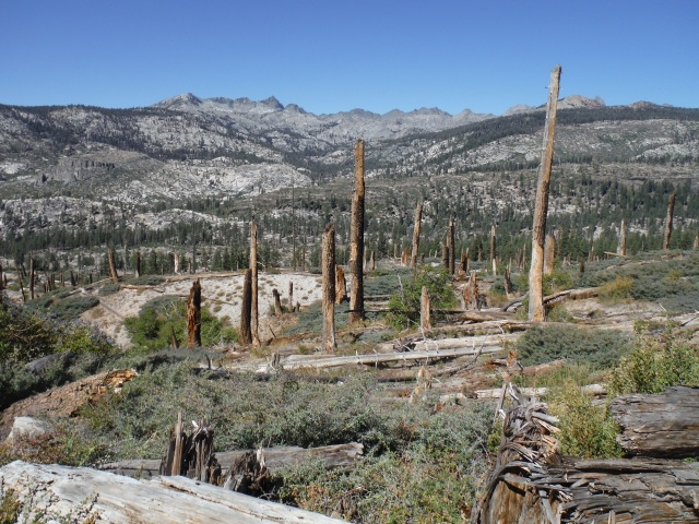Hiking through an old burn area near Red's Meadow and Devil's Post Pile National Monument.