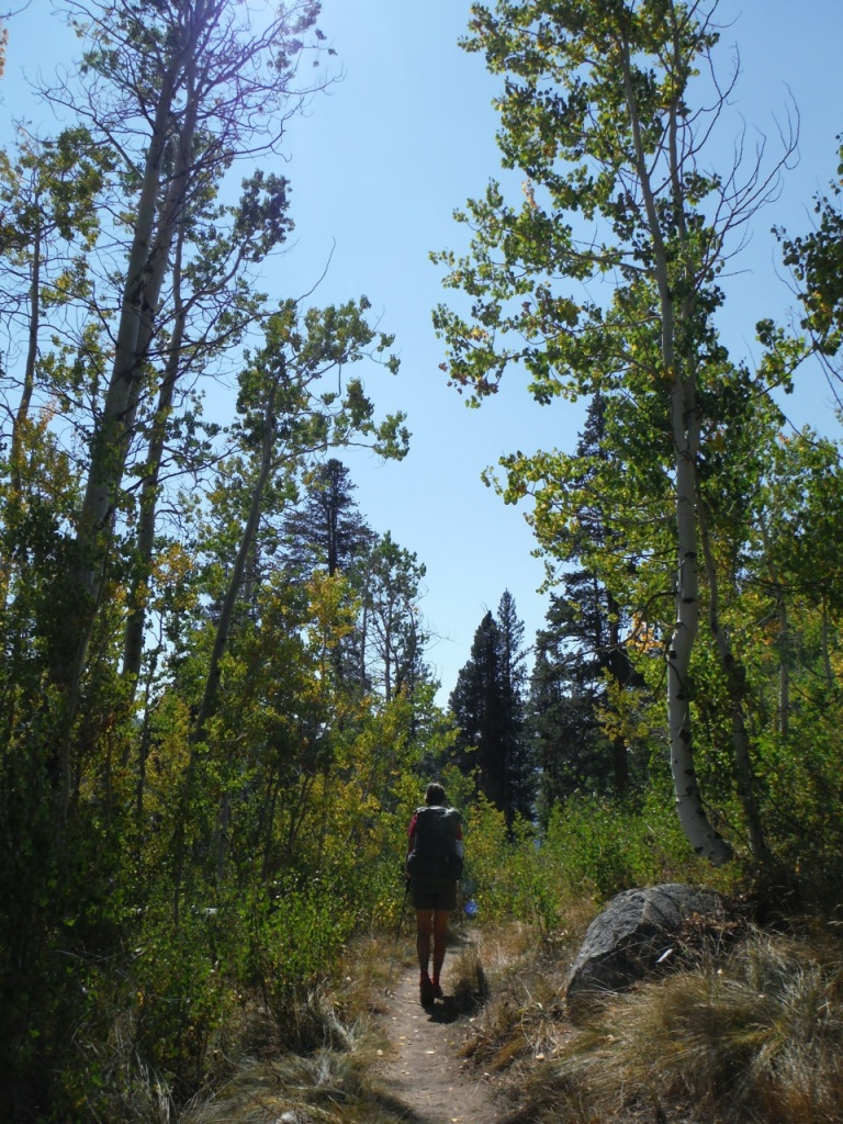 Walking though an Aspen Grove.  Both Ravi and I (Alison) liked the forests, meadows, alpine lakes, and just below treeline.