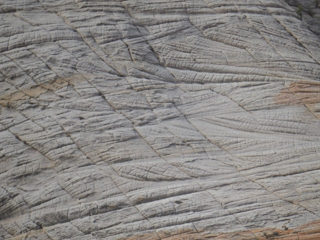Leathery look of the sandstone high up on the West Rim Trail (past Angel's Landing)