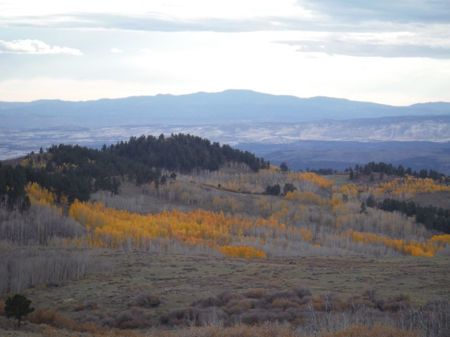 On the way to Capitol Reef National Park (after Bryce Canyon), we drove through the Dixie Forest, up to about 11,000ft over a mountain pass, all along the pass we had epic views of yellow Aspen fields like this. There were tons of deer all over the place as well.