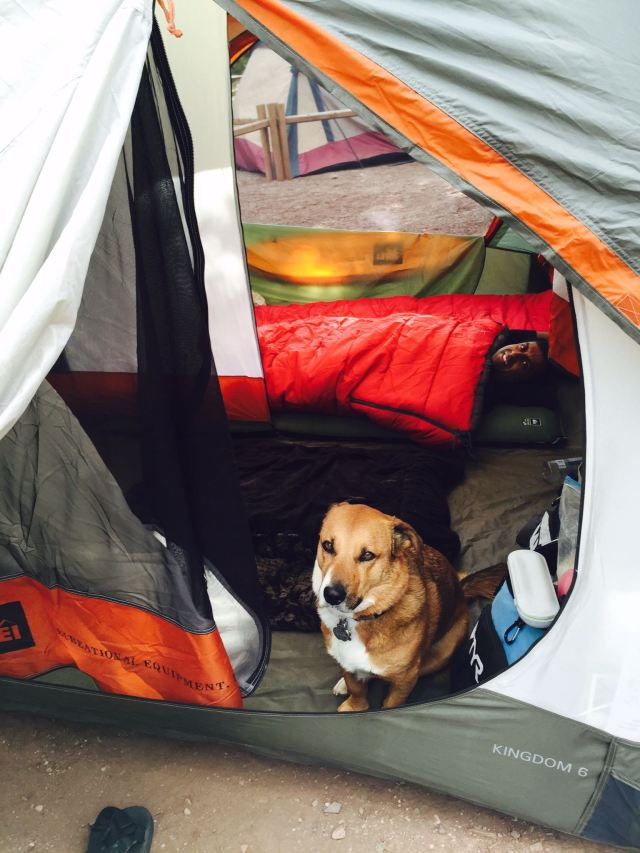Duke LOVES camping!....and sleeping on top of our sleeping bags when he gets the chance.