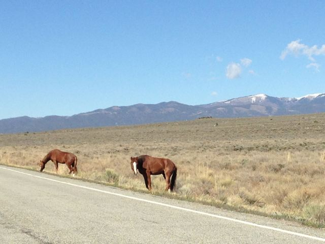 Wild horses along the road!