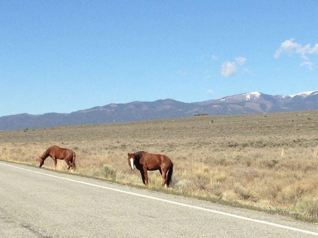 Wild horses along the road!