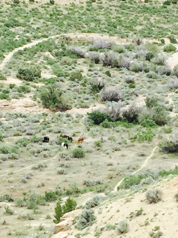 Wild horses.  We didn't want to bother them and stayed at a good distance, but close enough to watch them frolic.