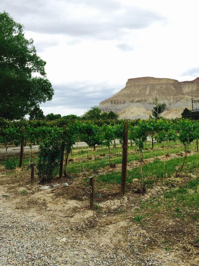 Belle Maison la Vie winery.
