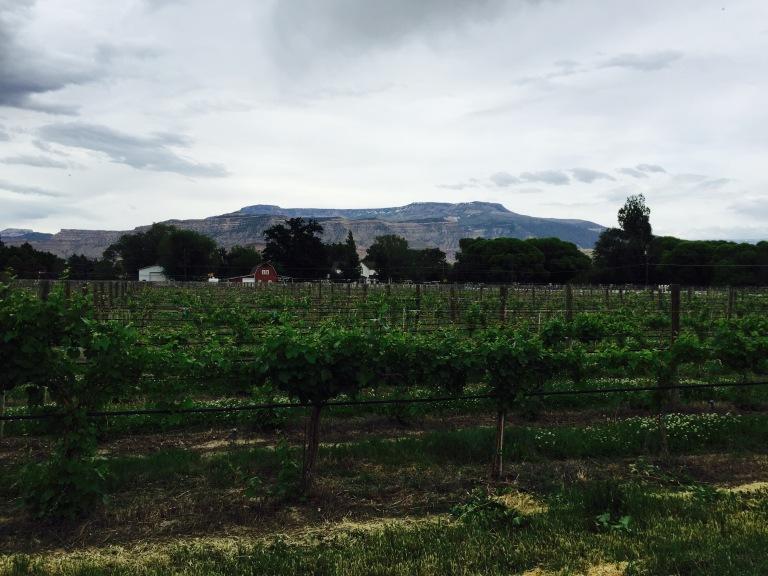 Vineyards in Palisade.